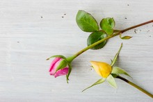 Pink And Yellow Rosebuds On The White Background