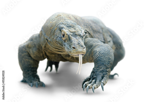 Photo  Komodo dragon isolated on white