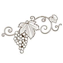 Grape Vine Branches Ornament Vector