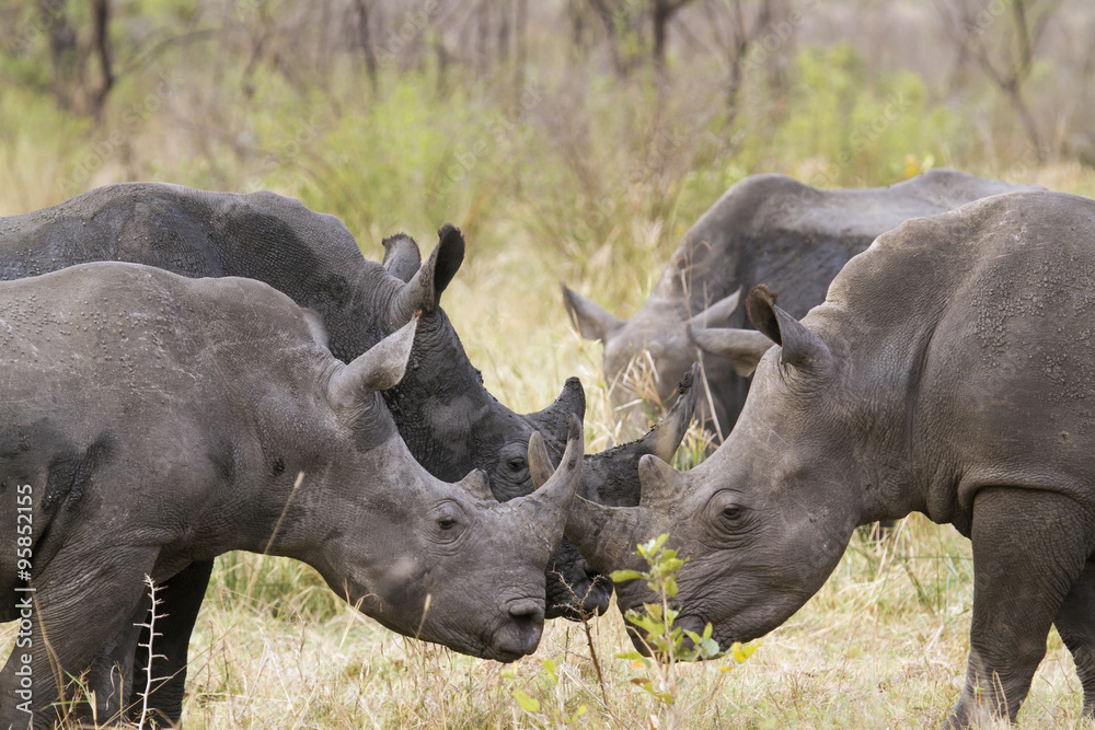 case 27 rhino capture in kruger national park in crafting executing strategy Crafting and executing strategy : the quest for competitive advantage : concepts and cases new york  27 rhino capture in kruger national park / william e mixon.