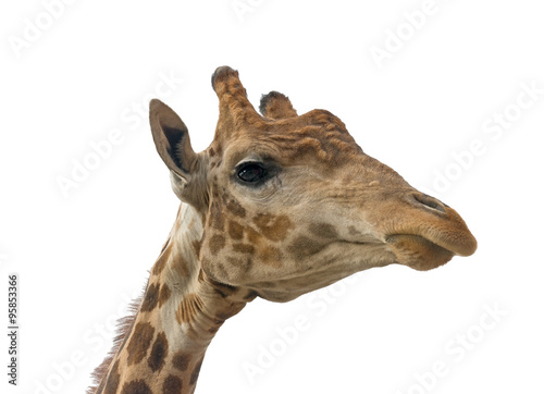 In de dag Giraffe Giraffe head face