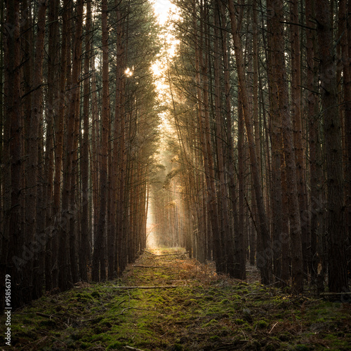 Canvas Prints Road in forest Mysterious pathway in the woods during autumn season
