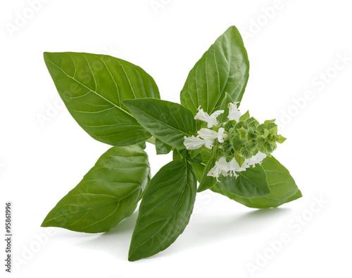 Basil flowers Tableau sur Toile