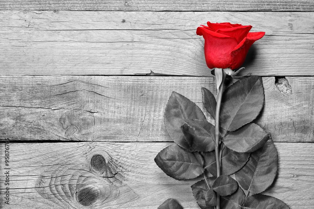 Fototapety, obrazy: Czerwona róża na czarno białym drewnianym tle