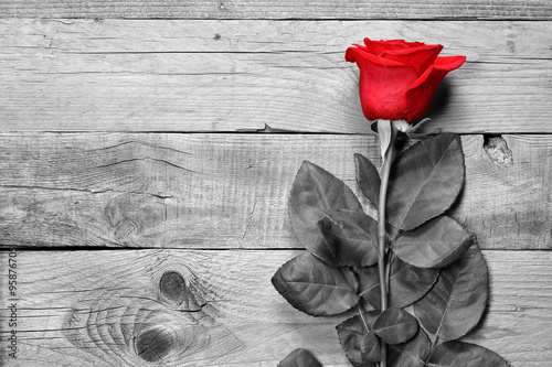 Fototapeta Red rose on black and white wooden background obraz