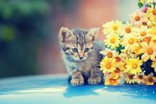 Cute Little Cat Sitting Near Y...
