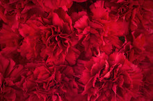 Bouquet Of Red Flowers Carnation For Use As Nature Background.