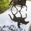 Horse and rider cross a shallow river