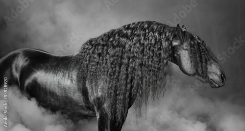 Fotografía  Portrait of black Frisian horse with long mane  in the smoke