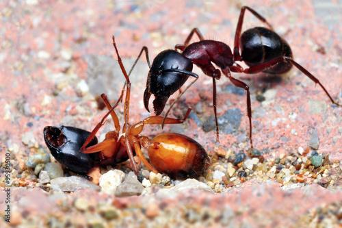 Przyjaciele mrówek