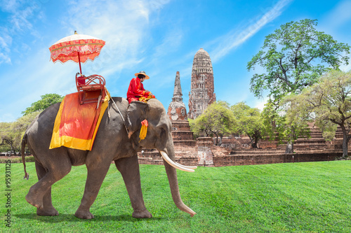 Elephant for Tourists in Ayutthaya, Thailand.