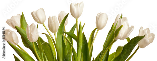 Photo  Spring Tulips in white
