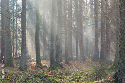Papiers peints Forets Autumnal misty morning in the forest