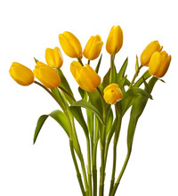Yellow Tulip Isolated