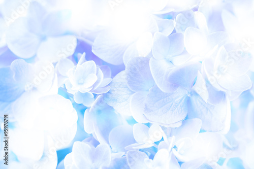 Photo  sweet soft  blue hydrangea flowers on background
