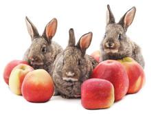 Three Rabbits With Apples.