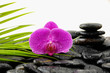 Spa Background with palm and wet stones with pink orchid