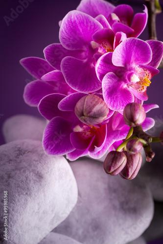 Poster Waterlelies Orchidea