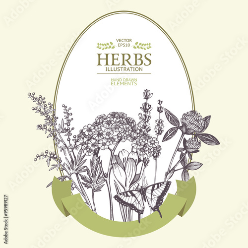 Photo  Vector design with hand drawn herbs