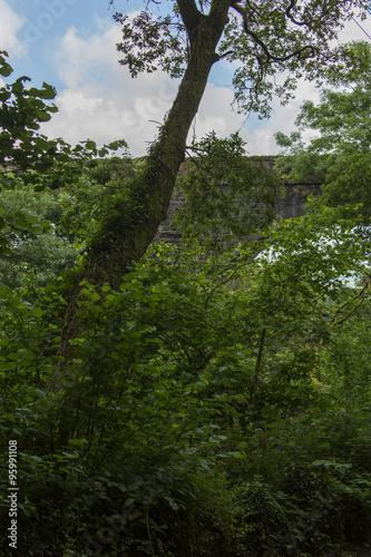 Wald © EinBlick