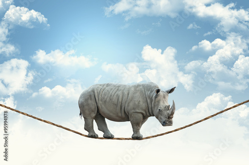 Spoed Foto op Canvas Neushoorn rhino on rope