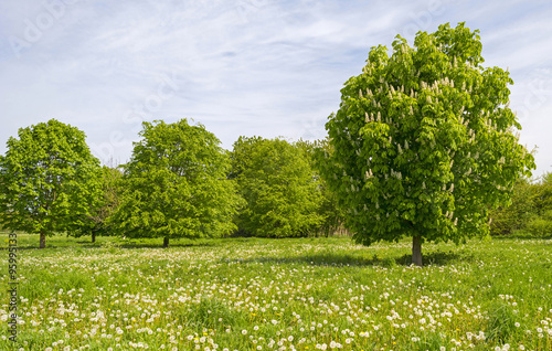 Tree in a sunny field in spring