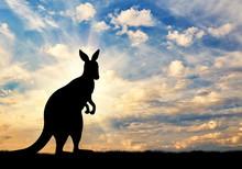 Kangaroo Silhouette Against A ...