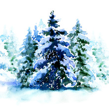 Group Of Christmas Trees Covered Snow In Winter Isolated
