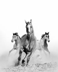 Panel Szklany Do pokoju chłopca wild horse in dust