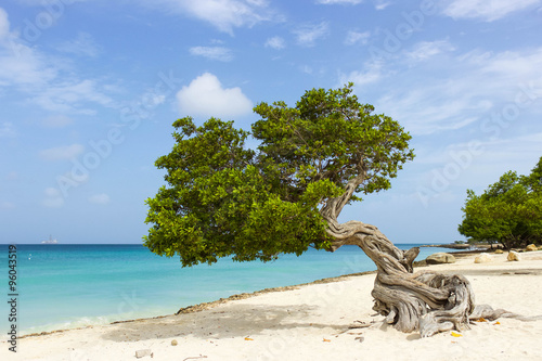 Платно Divi Divi Tree on the Caribbean Island of Aruba