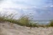 Hierbas en las dunas de la playa