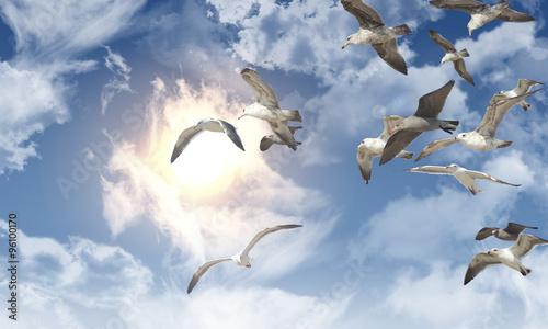 Fotografie, Obraz  Seagull Flying