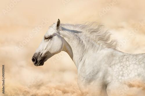 Obraz w ramie Portrait of gray beautiful arabian stallion at art background with clouds