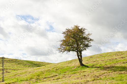 Photo  Hawthorn tree in a hilly field of grass.