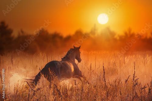 Fotografía  La corrida del caballo marrón al atardecer