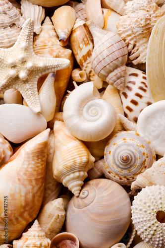 Fotografie, Obraz  seashell background