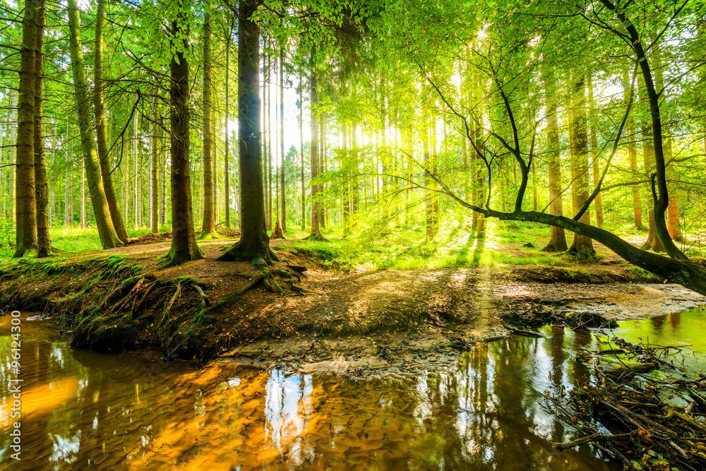 Valokuva Wald Panorama mit Bach und Sonnenstrahlen