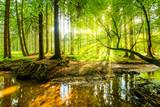Fototapeta Las - Wald Panorama mit Bach und Sonnenstrahlen