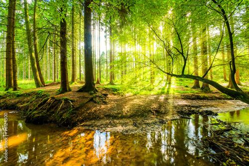 Wald Panorama mit Bach und Sonnenstrahlen Tapéta, Fotótapéta