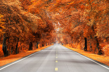 Road With Yellow And Red Leaf,...