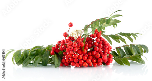 Fotografie, Obraz  Rowanberry with leaves isolated on white background