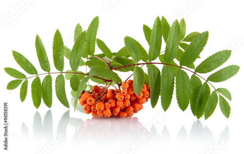 Photo Orange ash-berry with leaves isolated on white background