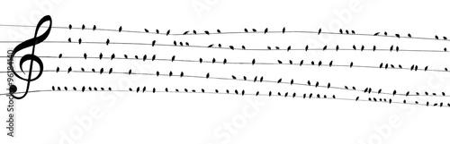 Ptaki na szerokim zespole muzycznym Klucz wiolinowy PDK