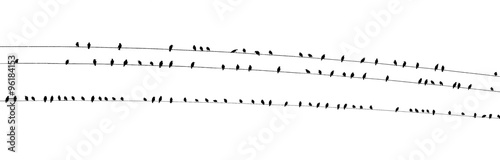 Photo  Birds on a wire wide PDK