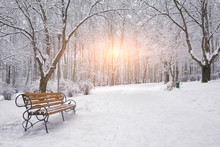 Snow-covered Trees And Benches In The City Park