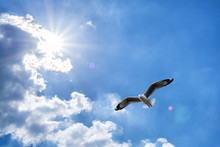 Seagull Flying Against Blue Cl...