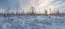 Panorama Of The Winter Landscape Of Taiga, The Yamal Peninsula