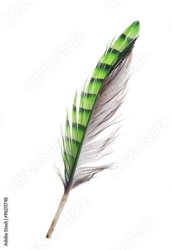 feather with green striped and grey sides