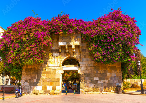 Fototapety, obrazy: beautiful bougainvillea over an old building of Kos town at Kos island in Greece