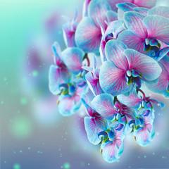Fototapeta Storczyki blue orchid branch